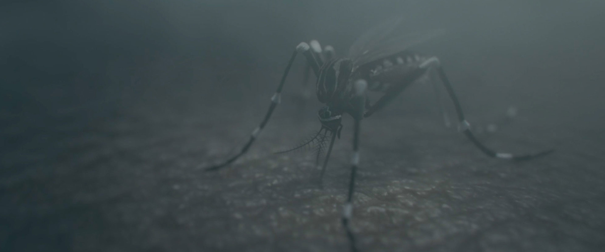 Mosquito in the darkness