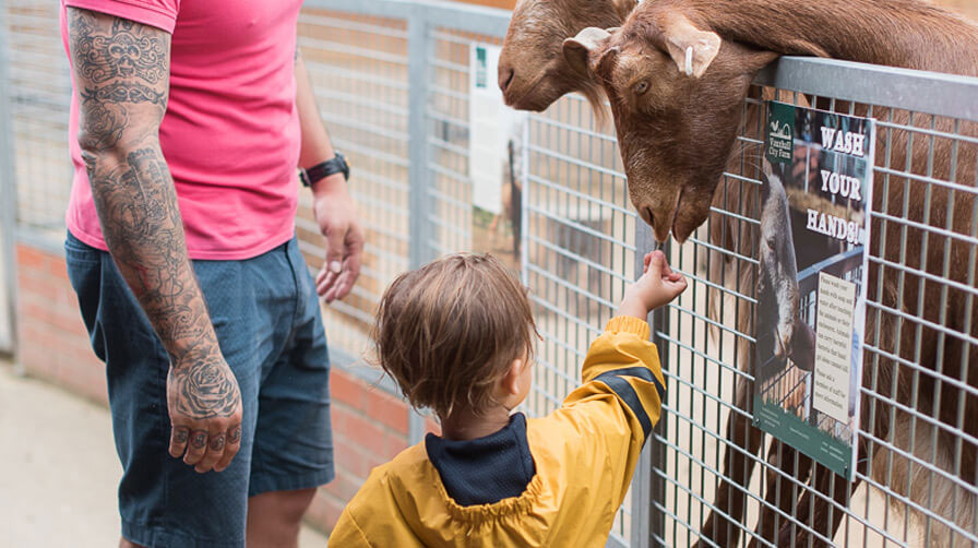 Child feeds goat at Vauxhall City Farm, Vauxhall London